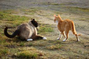 коты обходят друг друга