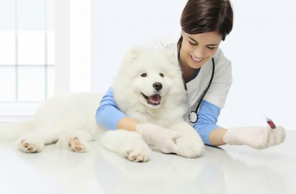 Низкий уровень глюкозы у собаки
