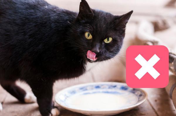 миф про кошек