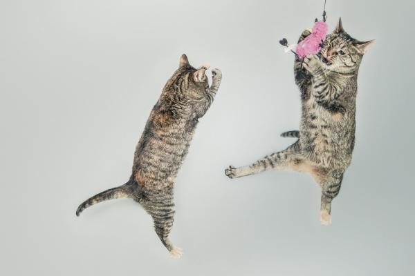 кошки играются