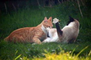 коты на траве