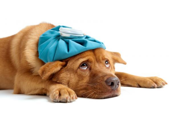 собака с грелкой