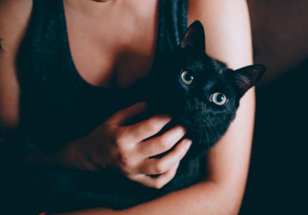 Зубы у кошек болезни выпадение и лечение