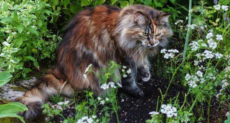 растения ядовитые для кошки