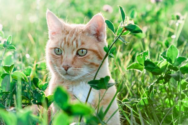 котяра в траве