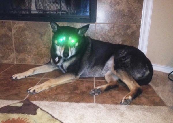 глаза светятся у собак