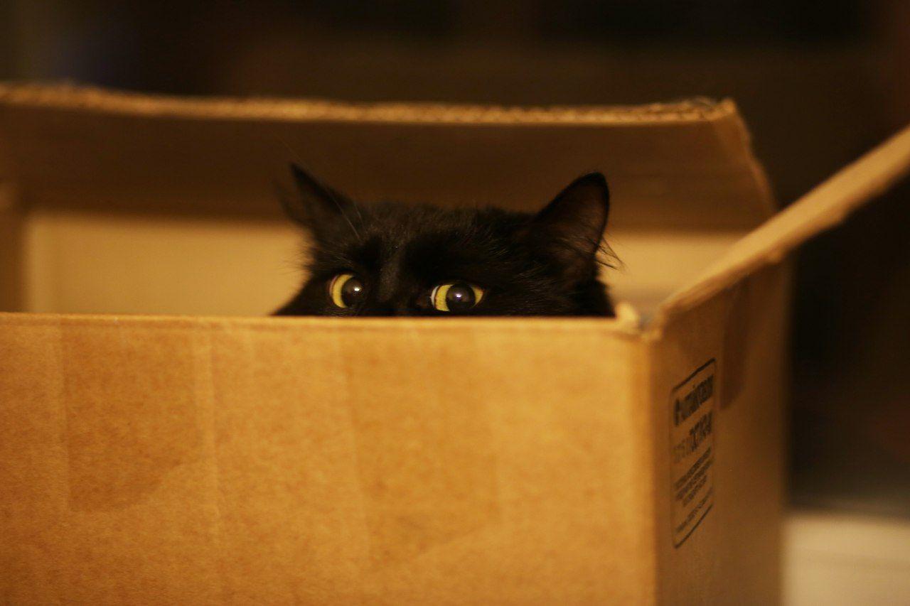 глаза из коробки