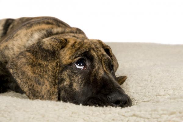 грустный пес не лает