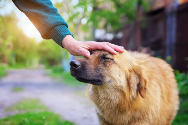 собака прижимает уши