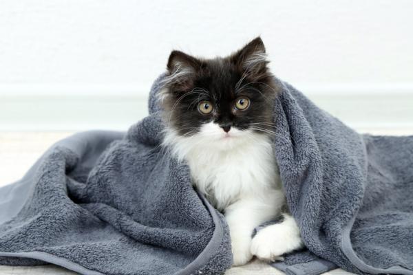 под одеялом кот