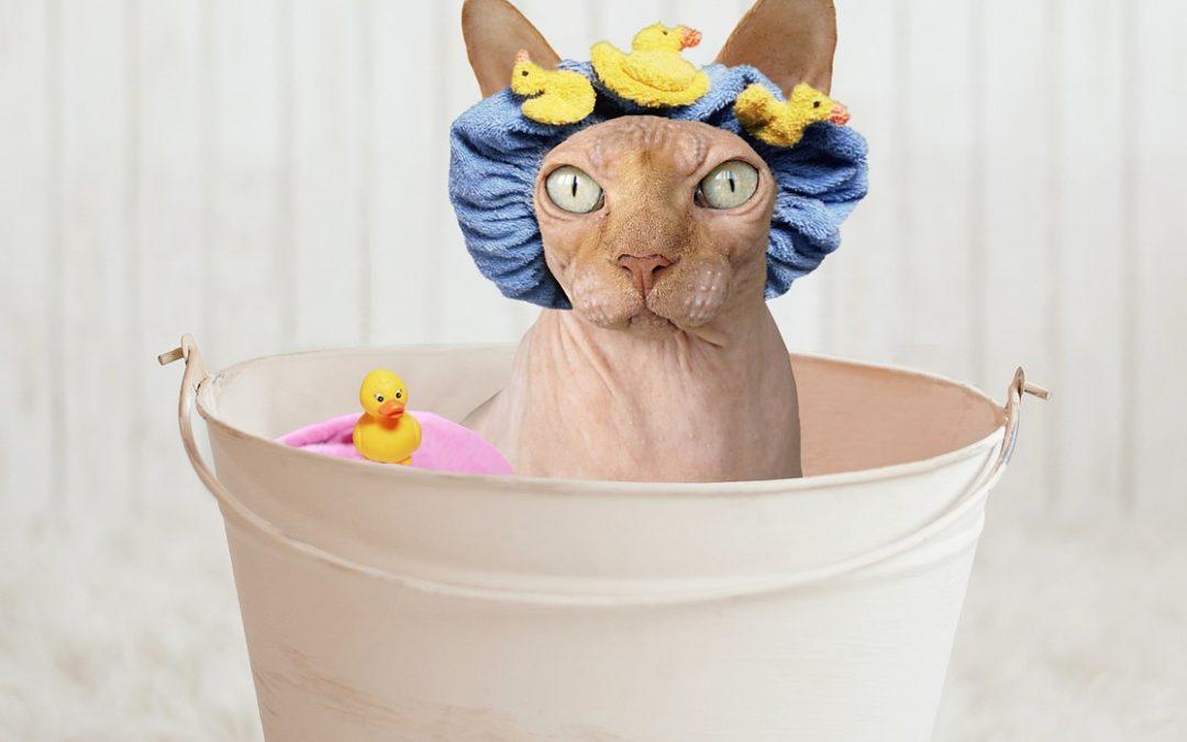 как искупать кошку