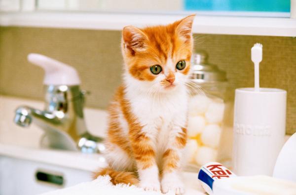 котенок в ванной