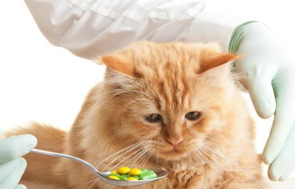 лекарства для кошки