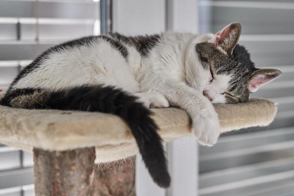 сколько может спать кошка