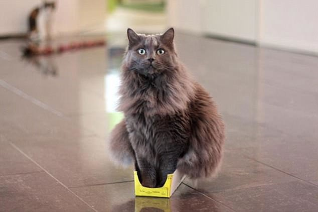 кот ы маленькой коробке