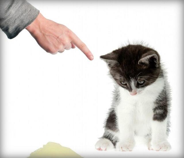 зачем наказывать кота