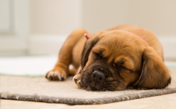 щенок спит