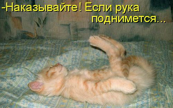 наказание кота