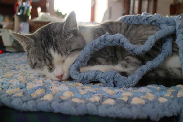Недержание мочи у кошек. Причины и лечение. Что мы называем недержанием мочи?