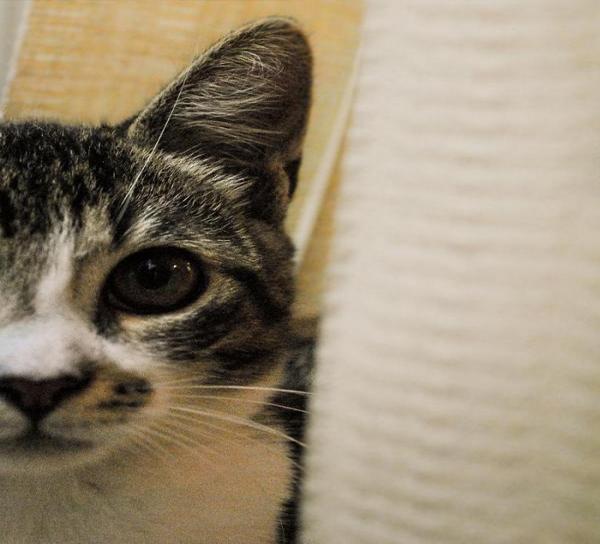 Когти кошачьих являются большим источником проблем для владельцев, так как они очень часто царапают кресла и домашнюю мебель. Чтобы попытаться найти баланс, в мы объясняем, как ухаживать за кошачьими когтями.