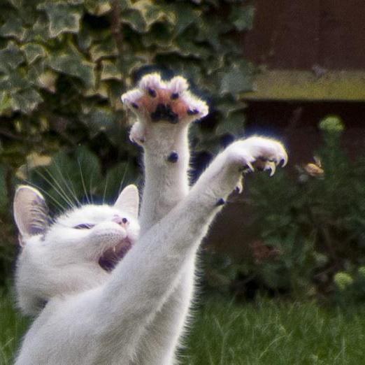 Как подстричь кошачьи ногти