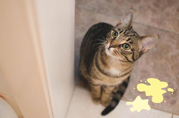 У кота недержание мочи - что делать?