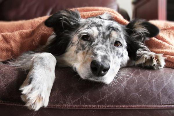 Фарингит у собак: симптомы и лечение - Причины фарингита у собак