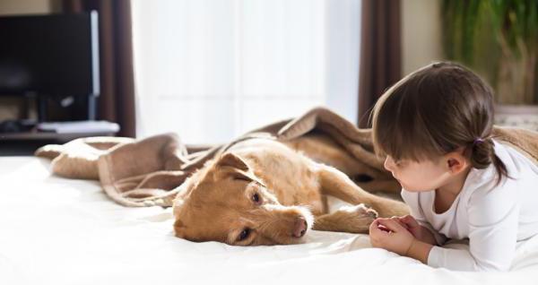 Как ухаживать за собакой с чумкой