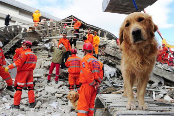 Предсказывают ли собаки землетрясения? -