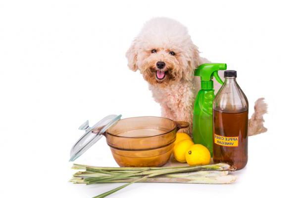 Домашние средства для устранения клещей моей собаки