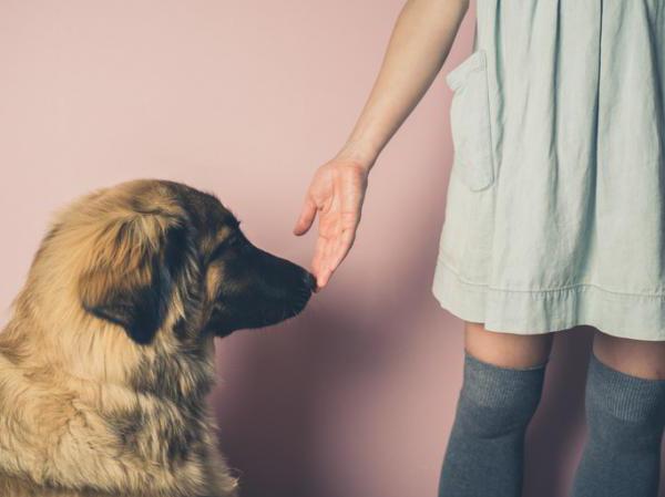 Чуют ли собаки страх?