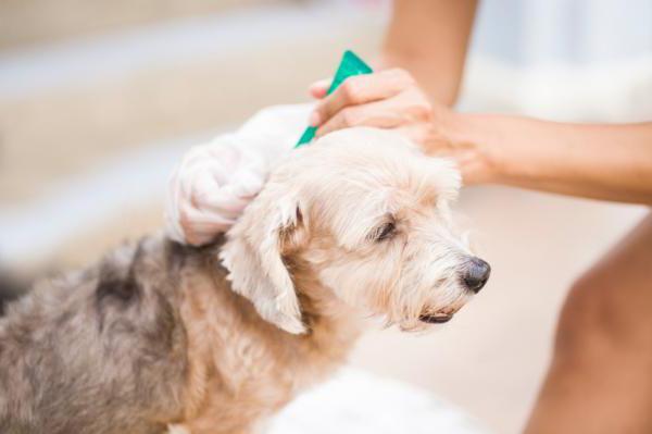 Домашние средства от клещей у собак - Домашние средства от клещей у собак