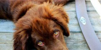 Причины желтухи у собак